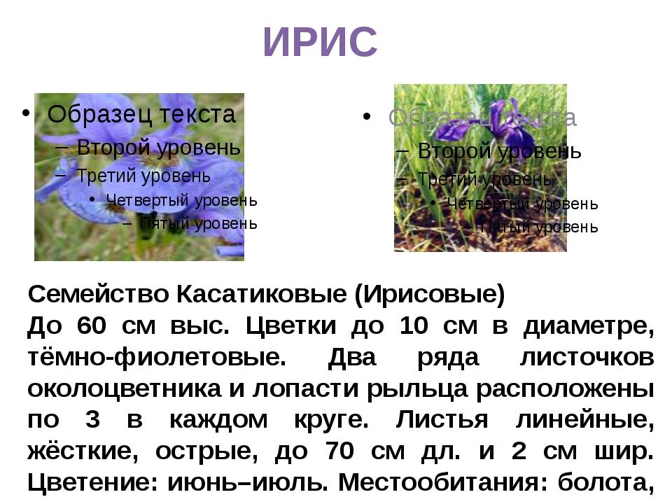ИРИС Семейство Касатиковые (Ирисовые) До 60 см выс. Цветки до 10 см в диаметр...