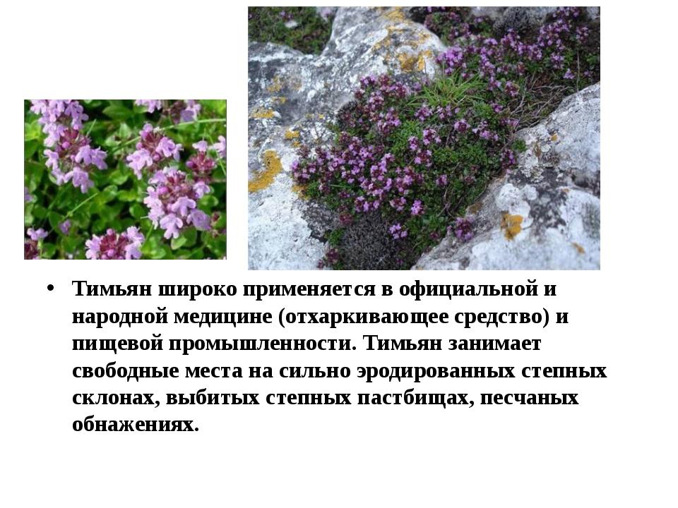 Тимьян широко применяется в официальной и народной медицине (отхаркивающее ср...