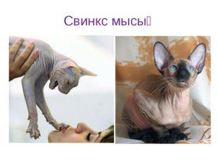 Свинкс мысық