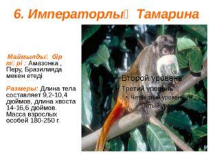 6. Императорлық Тамарина Маймылдың бір түрі : Амазонка , Перу, Бразилияда мек
