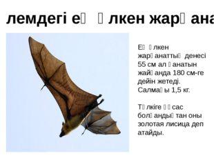Ең үлкен жарқанаттың денесі 55 см ал қанатын жайғанда 180 см-ге дейін жетеді.