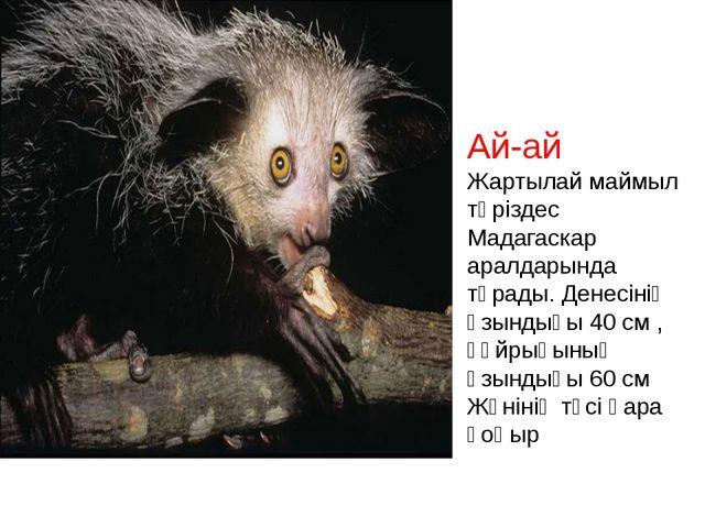 Ай-ай Жартылай маймыл тәріздес Мадагаскар аралдарында тұрады. Денесінің ұзынд...