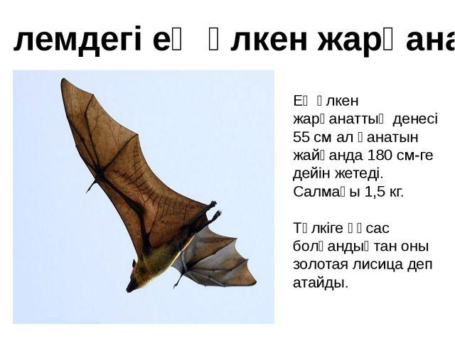 Ең үлкен жарқанаттың денесі 55 см ал қанатын жайғанда 180 см-ге дейін жетеді....