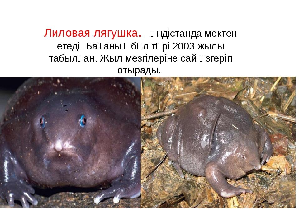 Лиловая лягушка. Үндістанда мектен етеді. Бақаның бұл түрі 2003 жылы табылған...