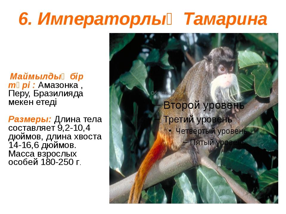 6. Императорлық Тамарина Маймылдың бір түрі : Амазонка , Перу, Бразилияда мек...