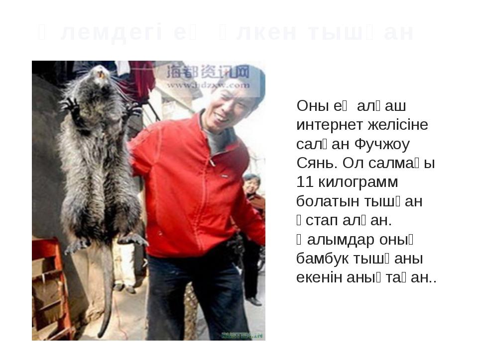 Фото самой большой крысы выложил в интернет торговец из Фучжоу по имени Сянь....