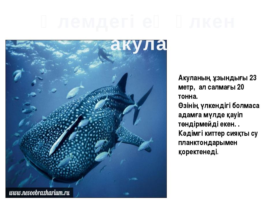 Акуланың ұзындығы 23 метр, ал салмағы 20 тонна. Өзінің үлкендігі болмаса адам...