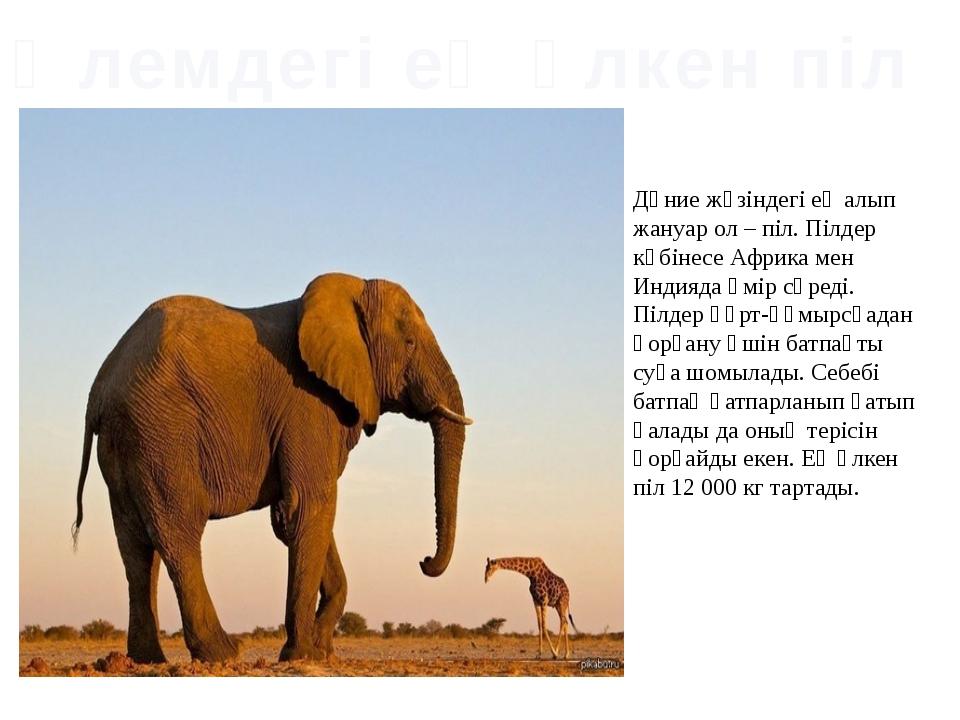 Дүние жүзіндегі ең алып жануар ол – піл. Пілдер көбінесе Африка мен Индияда ө...
