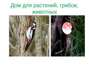 Дом для растений, грибов, животных