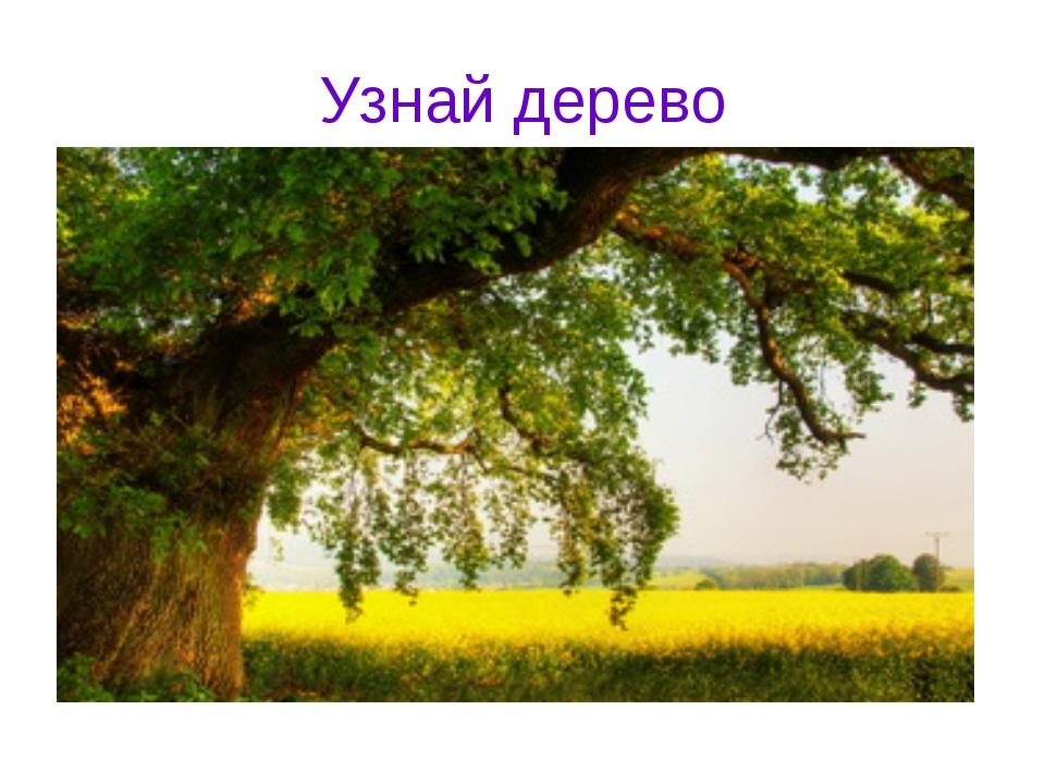 Узнай дерево