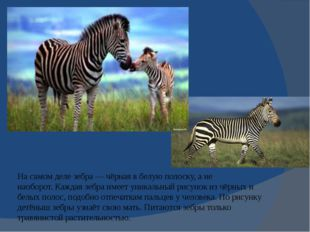 На самом деле зебра— чёрная в белую полоску, а не наоборот.Каждая зебра име