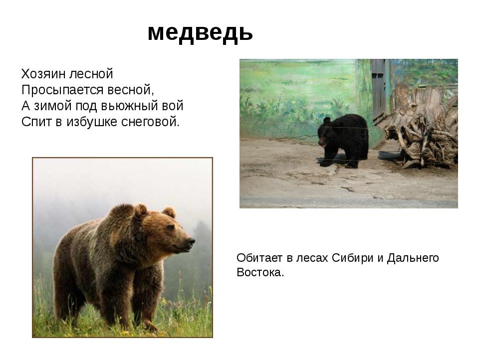 медведь Хозяин лесной Просыпается весной, А зимой под вьюжный вой Спит в избу...