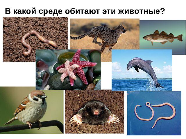 В какой среде обитают эти животные?
