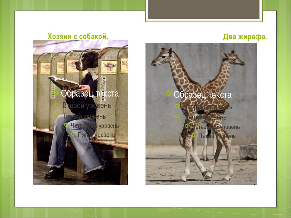 Хозяин с собакой. Два жирафа.