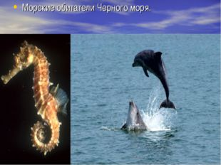 Морские обитатели Черного моря.