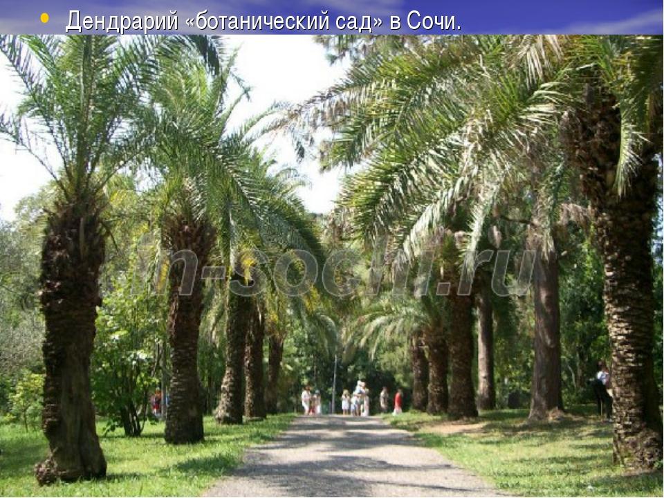 Дендрарий «ботанический сад» в Сочи.