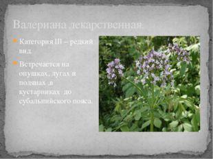 Категория III – редкий вид. Встречается на опушках, лугах и полянах ,в кустар