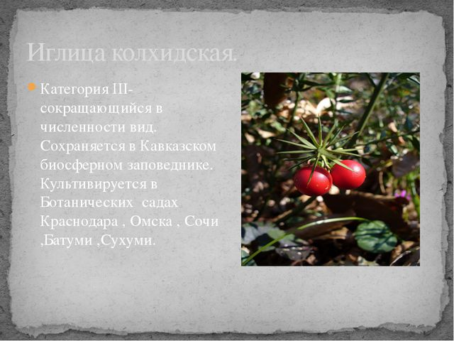 Категория III- сокращающийся в численности вид. Сохраняется в Кавказском биос...