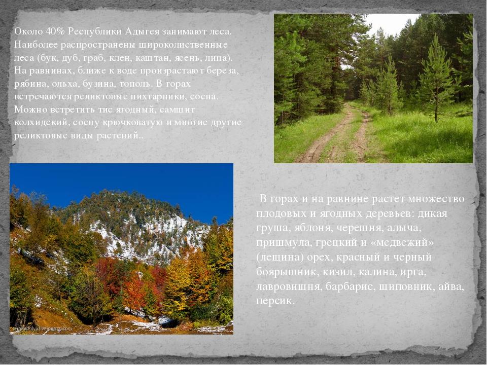 Около 40% Республики Адыгея занимают леса. Наиболее распространены широколист...
