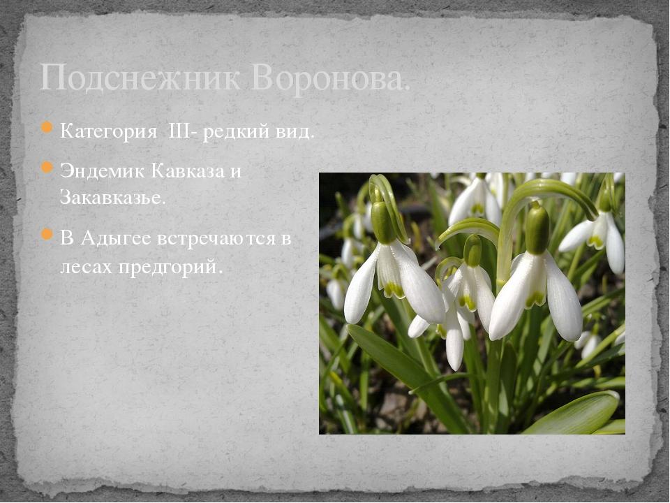 Категория III- редкий вид. Эндемик Кавказа и Закавказье. В Адыгее встречаются...