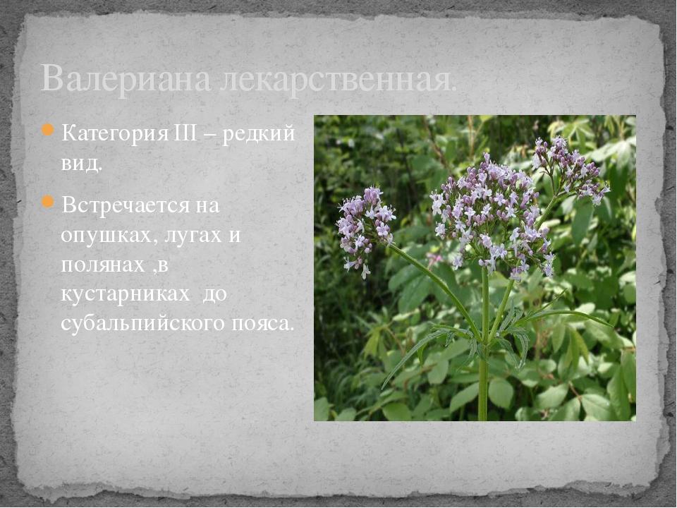 Категория III – редкий вид. Встречается на опушках, лугах и полянах ,в кустар...