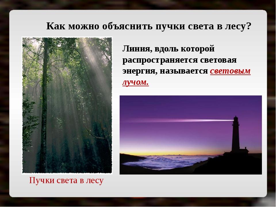 Пучки света в лесу Как можно объяснить пучки света в лесу? Линия, вдоль котор...