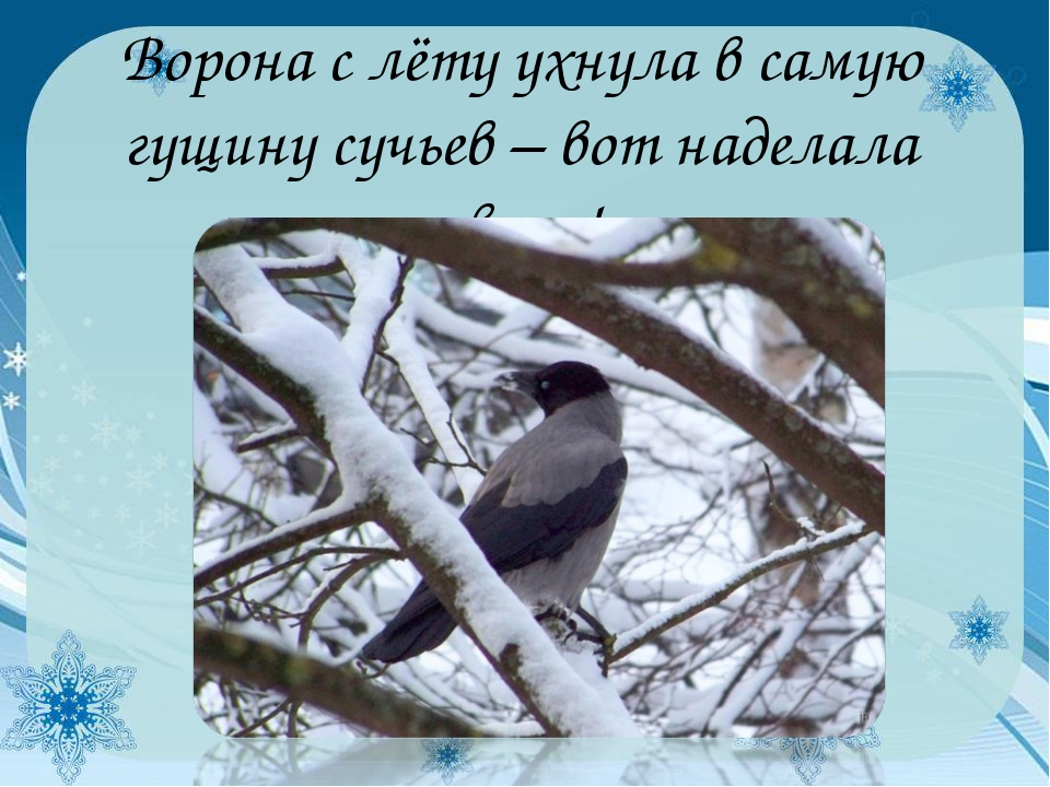Ворона с лёту ухнула в самую гущину сучьев – вот наделала звону!