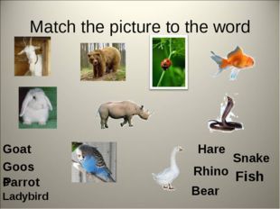 Match the picture to the word Goat Bear Fish Goose Hare Rhino Parrot Snake La