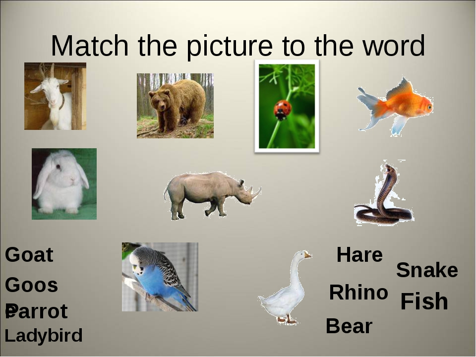 Match the picture to the word Goat Bear Fish Goose Hare Rhino Parrot Snake La...