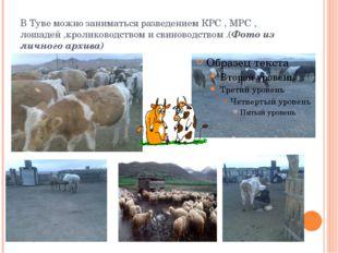 В Туве можно заниматься разведением КРС , МРС , лошадей ,кролиководством и св