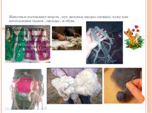 Животные поставляют шерсть , пух ,меховые шкуры (овчина), кожу для изготовлен