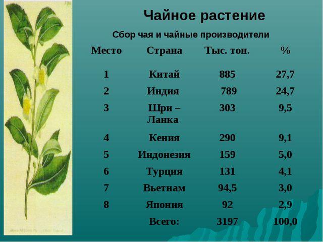 Чайное растение Сбор чая и чайные производители МестоСтранаТыс. тон.% 1К...