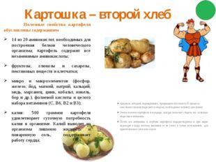 Картошка – второй хлеб Полезные свойства картофеля обусловлены содержанием 14