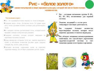 Рис - «белое золото» самая популярная в мире зерновая культура, которой питае