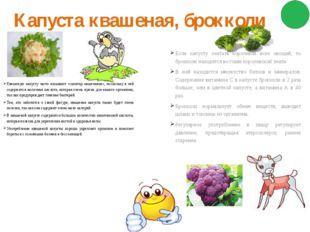 Капуста квашеная, брокколи Квашеную капусту часто называют «санитар кишечника