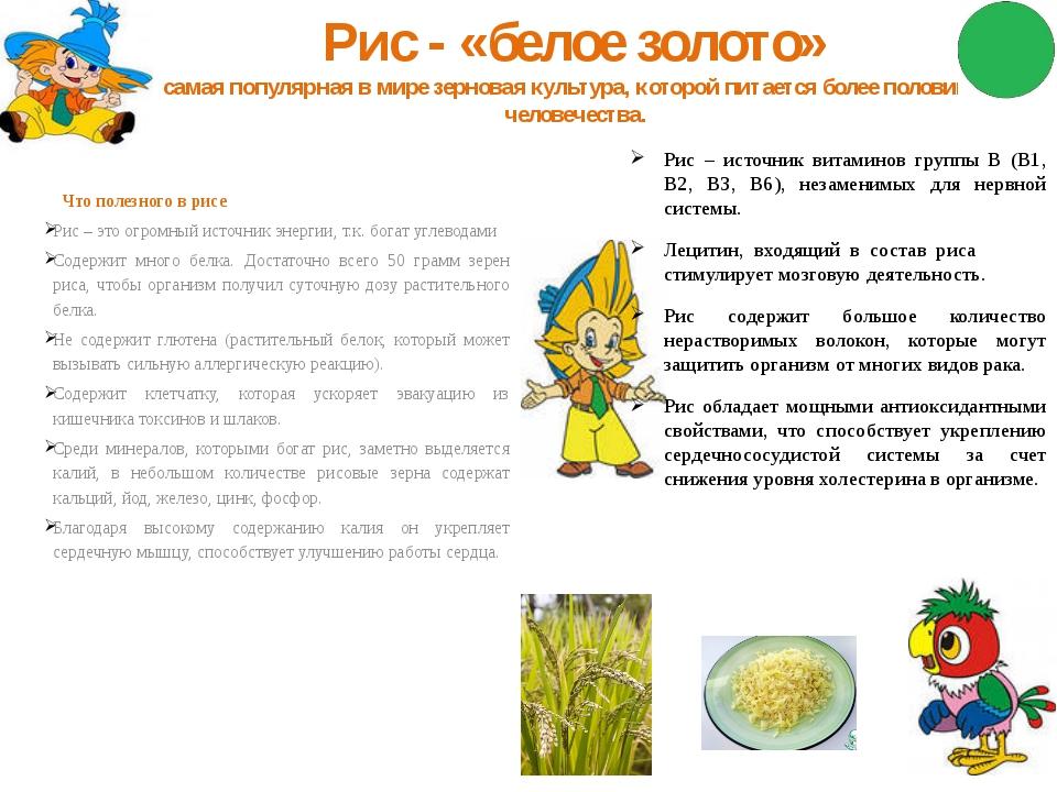 Рис - «белое золото» самая популярная в мире зерновая культура, которой питае...