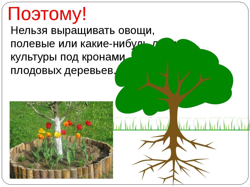 Нельзя выращивать овощи, полевые или какие-нибудь другие культуры под кронами...