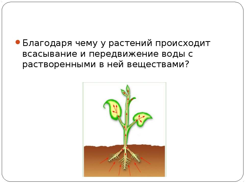Благодаря чему у растений происходит всасывание и передвижение воды с раство...