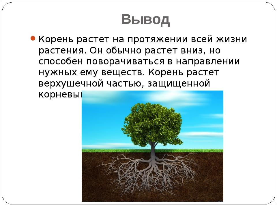 Вывод Корень растет на протяжении всей жизни растения. Он обычно растет вниз,...