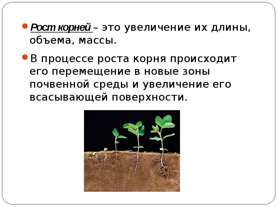 Рост корней – это увеличение их длины, объема, массы. В процессе роста корня...