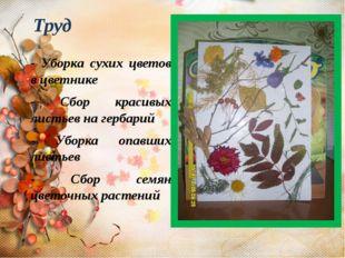 - Уборка сухих цветов в цветнике - Сбор красивых листьев на гербарий - Уборка