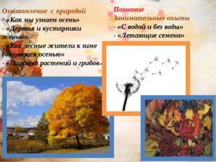 Ознакомление с природой - «Как мы узнаем осень» - «Деревья и кустарники осень