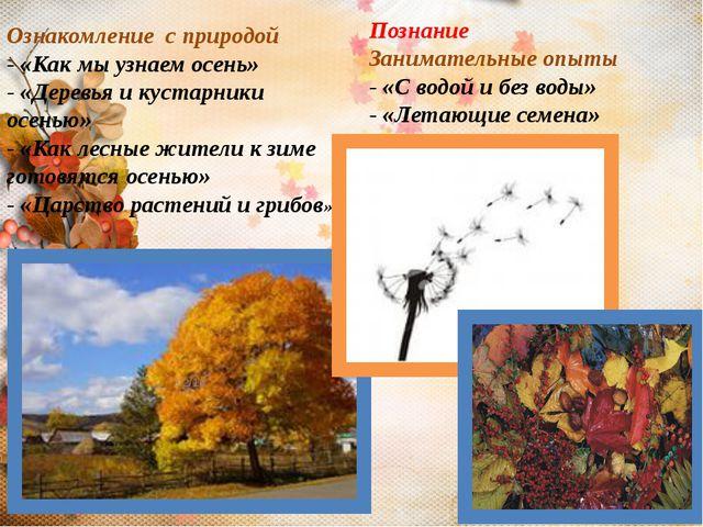 Ознакомление с природой - «Как мы узнаем осень» - «Деревья и кустарники осень...