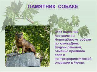 Этот памятник поставлен в Новосибирске собаке по кличкеДжек. Будучи раненой,