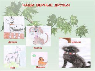 НАШИ ВЕРНЫЕ ДРУЗЬЯ Дружок Кнопка Малыш Рекс Черныш