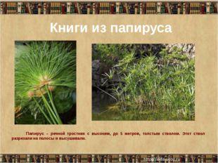 Книги из папируса Папирус – речной тростник с высоким, до 5 метров, толстым