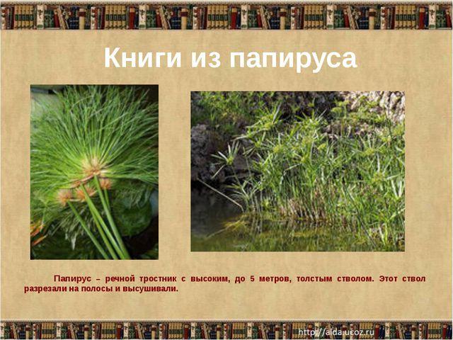 Книги из папируса Папирус – речной тростник с высоким, до 5 метров, толстым...