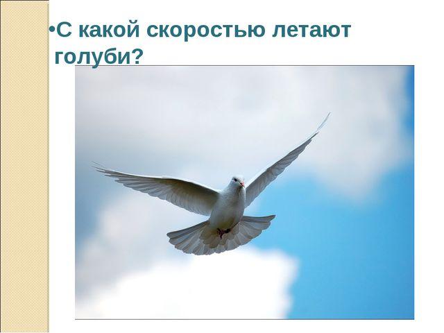 С какой скоростью летают голуби?