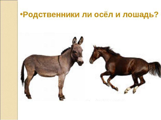 Родственники ли осёл и лошадь?