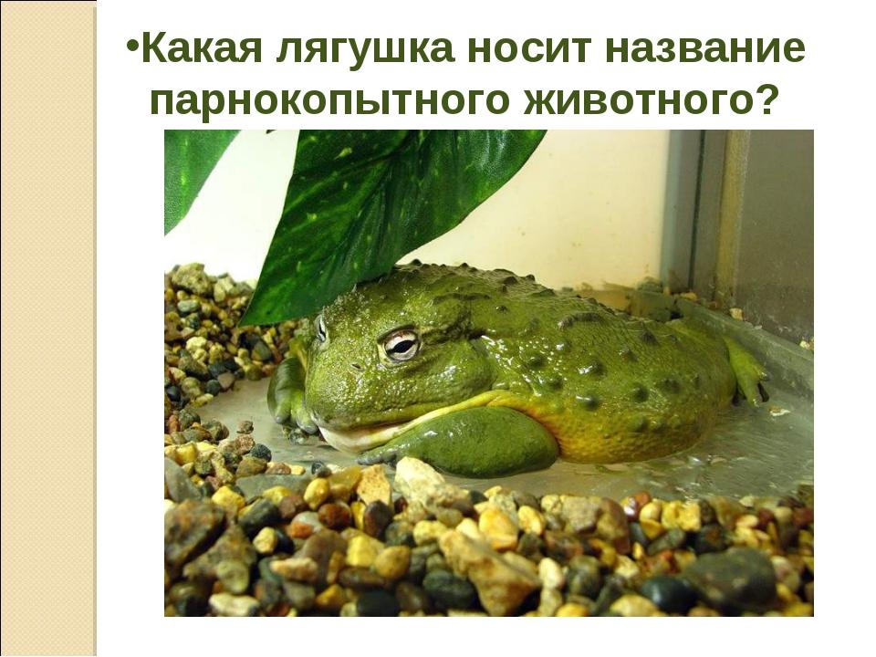 Какая лягушка носит название парнокопытного животного?